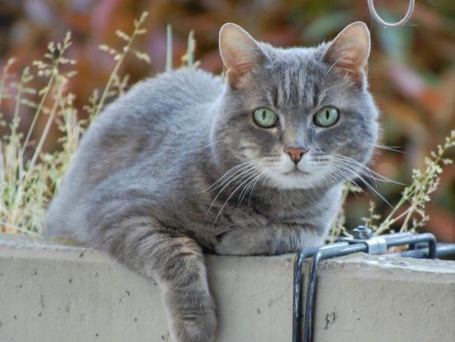 17-febbraio-festa-gatto